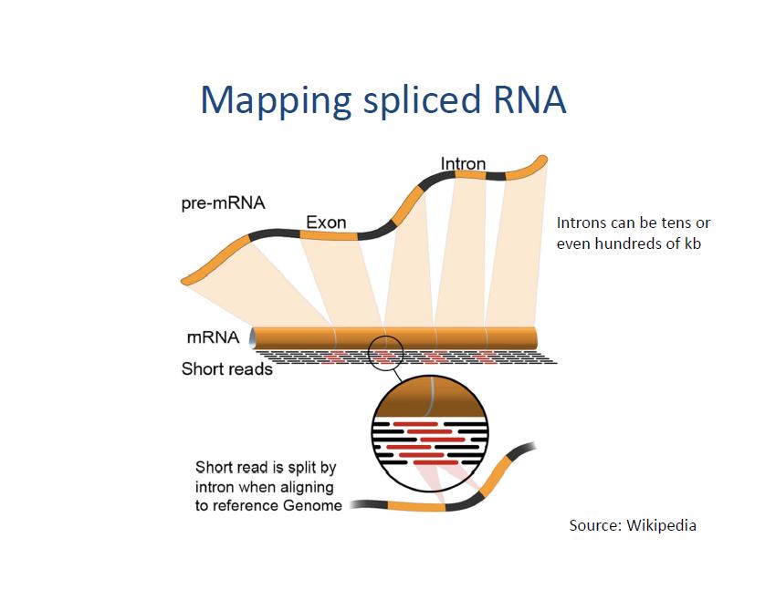 Exscigenl11s06mappingspliceddnag mapping spliced dna slide 06 ccuart Gallery